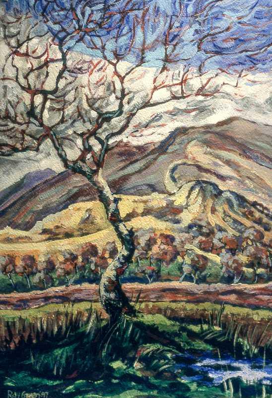 37. Old silver birch